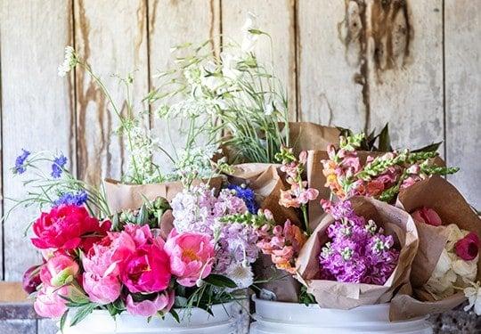 Barn Door Blooms CT Brand Session-9